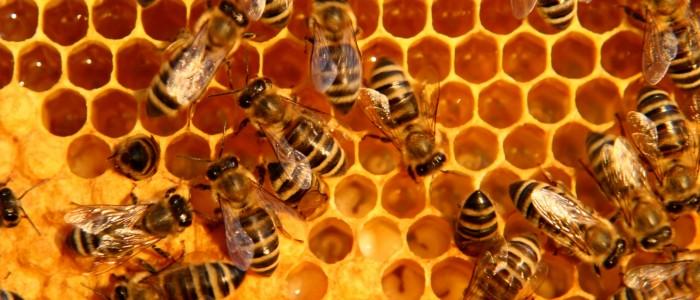 inside bee-hive - motion blur
