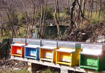 Modifica agli articoli regionali sull'apicoltura