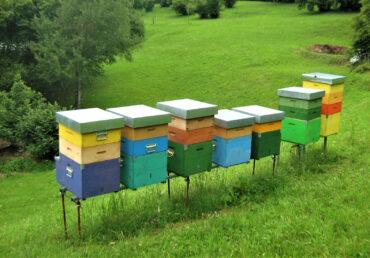 Corso base di apicoltura 2022